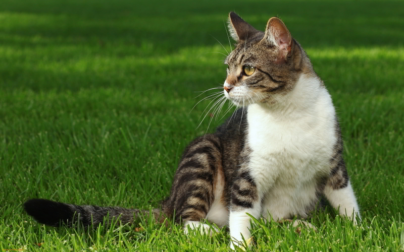 [Panduan Lengkap] Cara Merawat Kucing Kampung 2020