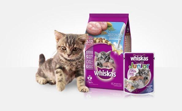 5 Makanan Kucing Persia Yang Murah