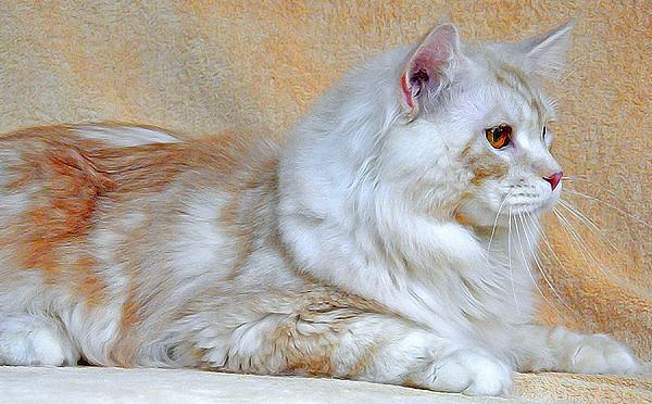 Gambar Kucing Kecil godean.web.id