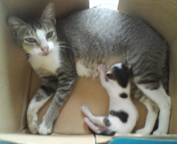 Mengatasi Kucing Beranak di kardus