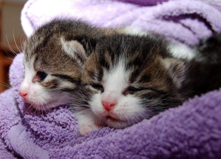 Menyembuhkan Kucing Bersin