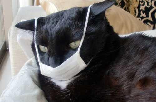 cara Menyembuhkan Kucing Bersin