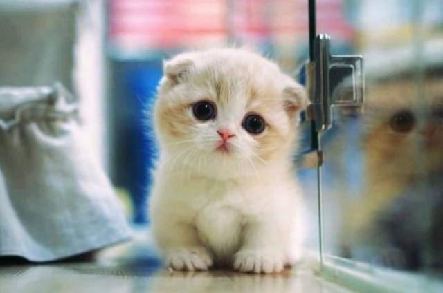 kucing imut Imut masih anak