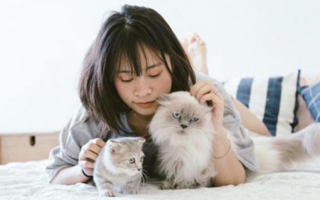 Cara Merawat Anak Kucing Anggora
