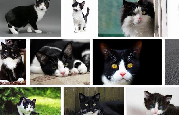 kucing hitam putih