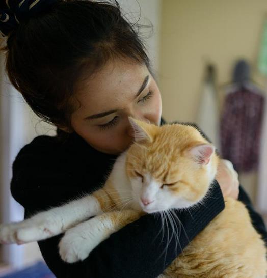 Kucing Jago Akting