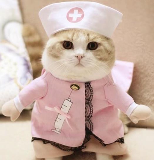 Kucing anggora didandani