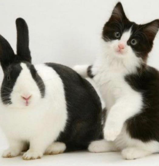 Pertemanan Kucing dengan Hewan lain