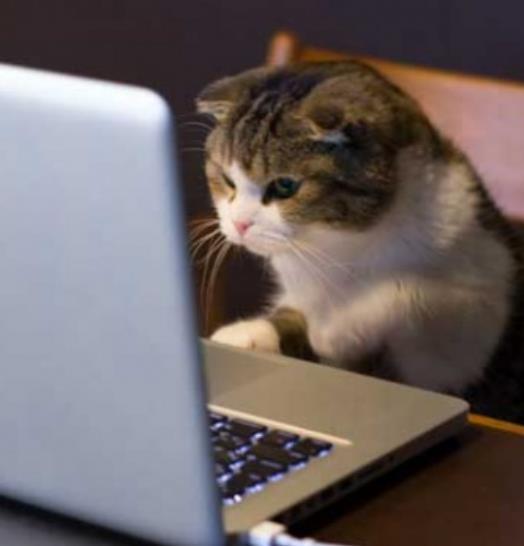 kucing Fokus belajar